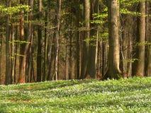 Het bos van de lente royalty-vrije stock foto's