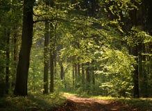 Het bos van de lente stock afbeelding
