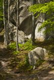 Het bos van de lente Stock Foto's