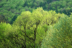 Het bos van de lente Stock Foto
