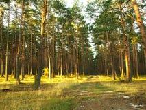 Het Bos van de lente Royalty-vrije Stock Afbeeldingen