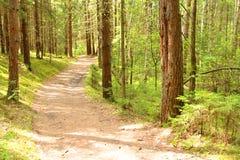 Het bos van de lente. Finland. Stock Afbeeldingen