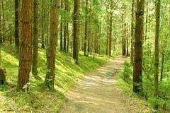 Het bos van de lente. Finland. stock foto's