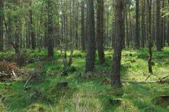 Het bos van de lente in Schotland Royalty-vrije Stock Fotografie