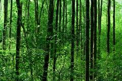 Het Bos van de mangrove Stock Foto