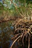 Het Bos van de mangrove Royalty-vrije Stock Fotografie