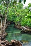 Het Bos van de mangrove met Duidelijke Natuurlijke Pool Royalty-vrije Stock Afbeeldingen