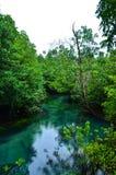 Het Bos van de mangrove met Duidelijke Natuurlijke Pool Royalty-vrije Stock Fotografie