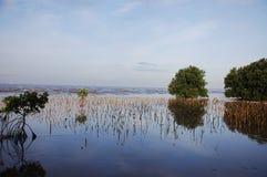Het bos van de mangrove, moerasland Stock Foto's