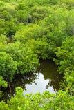 Het Bos van de mangrove van hierboven stock foto's