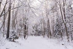 Het bos van de mirakelwinter door sneeuw wordt behandeld die Royalty-vrije Stock Foto's