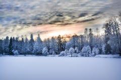 Het bos van de mirakelwinter door sneeuw wordt behandeld die Royalty-vrije Stock Afbeeldingen