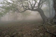 Het bos van de mist Royalty-vrije Stock Foto's