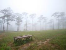 Het bos van de mistpijnboom Stock Foto