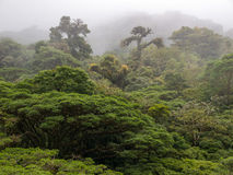 Het bos van de Monteverdewolk in Costa Rica Royalty-vrije Stock Afbeeldingen
