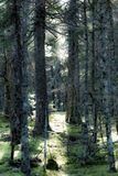 Het bos van de mysticus royalty-vrije stock foto's