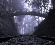 Het Bos van de mysticus Royalty-vrije Stock Afbeeldingen