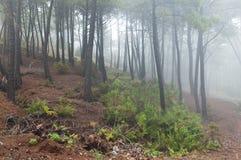 Het bos van de mysticus Stock Foto's