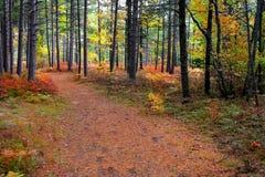 Het bos van de mysticus Royalty-vrije Stock Foto