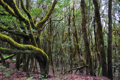 Het bos van de mysticus Stock Afbeeldingen