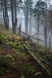 Het bos van de mysticus Stock Fotografie