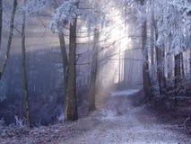 Het bos van de mysticus. royalty-vrije stock afbeelding