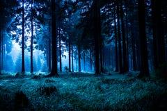 Het bos van de nacht Stock Foto's