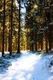 Het bos van de ochtend Stock Afbeelding