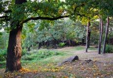 Het bos van de ochtend Royalty-vrije Stock Foto's