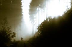 Het bos van de ochtend Royalty-vrije Stock Afbeeldingen