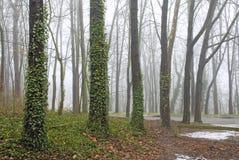 Het bos van de ochtend met mist Stock Afbeelding