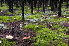 Het bos van de paddestoel Royalty-vrije Stock Foto's