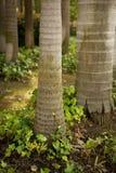 Het Bos van de palm royalty-vrije stock afbeelding
