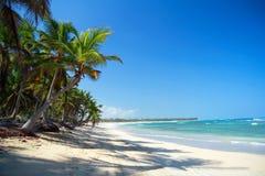 Het bos van de palm op Caraïbisch strand Stock Afbeeldingen