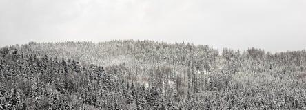 Het bos van de panoramasneeuw Royalty-vrije Stock Afbeeldingen