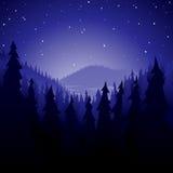 Het bos van de pijnboom bij nacht Stock Foto's