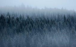 Het bos van de pijnboom in de mist stock fotografie