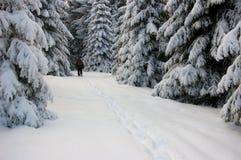 Het bos van de pijnboom in de winter Royalty-vrije Stock Afbeeldingen