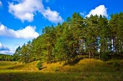 Het bos van de pijnboom dichtbij Tarusa stad, Rusland Royalty-vrije Stock Afbeeldingen