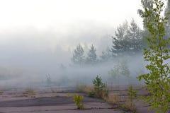 Het bos van de pijnboom in dichte mist Royalty-vrije Stock Afbeelding