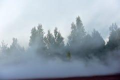 Het bos van de pijnboom in dichte mist Royalty-vrije Stock Afbeeldingen