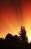 Het bos van de pijnboom met zonnestraal royalty-vrije stock afbeeldingen