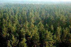 Het bos van de pijnboom in mist (lucht) 27 Royalty-vrije Stock Afbeeldingen