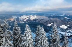 Het bos van de pijnboomwinter door sneeuw op achtergrondbergen wordt behandeld die Stock Fotografie