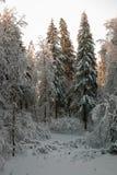 Het bos van de sneeuw Royalty-vrije Stock Afbeeldingen