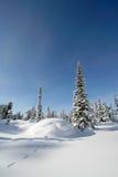 Het bos van de sneeuw Stock Afbeeldingen