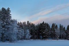 Het bos van de sneeuw en schoonheidshemel Royalty-vrije Stock Fotografie