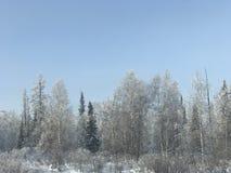 Het bos van de sneeuwdekking Royalty-vrije Stock Fotografie