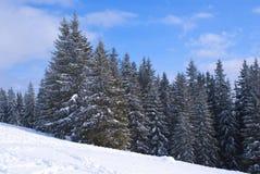 Het bos van de spar royalty-vrije stock foto
