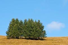 Het bos van de spar op een weide Royalty-vrije Stock Afbeelding